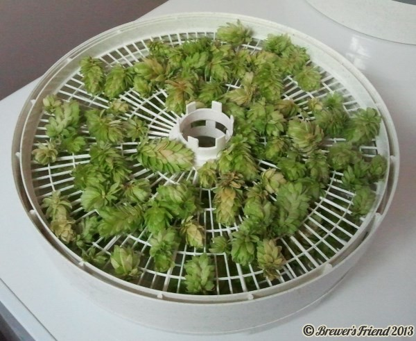 drying hops food dehydrator
