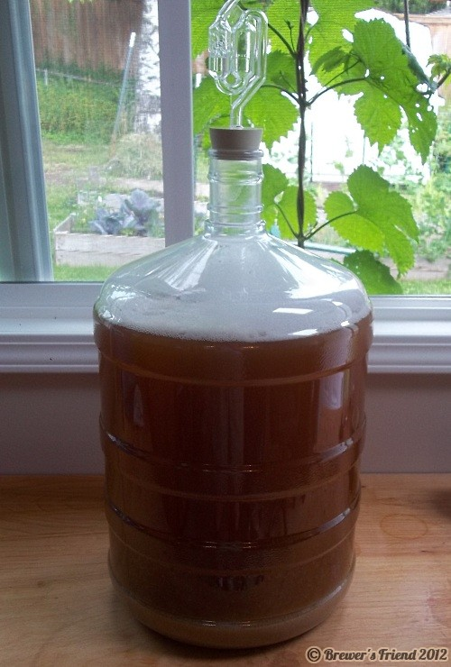 summer home brew carboy